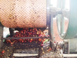 Hand-powered machine used to pop the coffee beans out of the cherries.