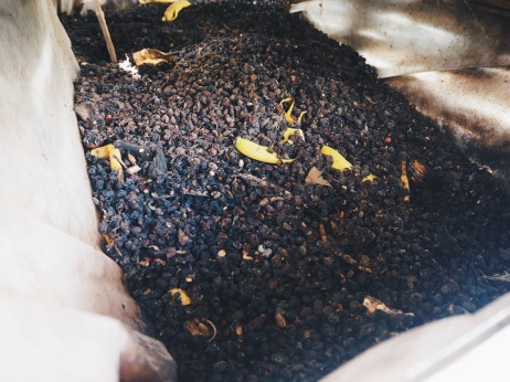 Organic compost for the farm, made with old fruit skins and cherries.